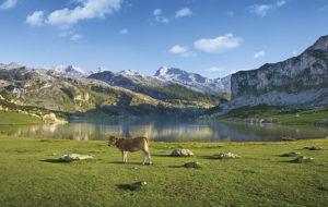 Parque Natural de los Picos de Europa (Asturias, España)